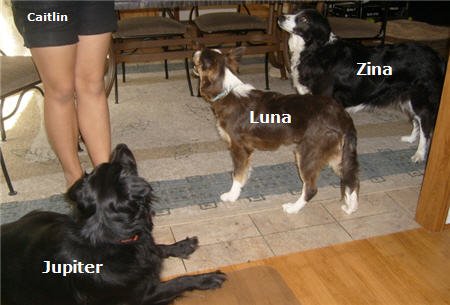 hall family dogs luna zina jupiter caitlin