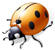 seven spots on a lady bug