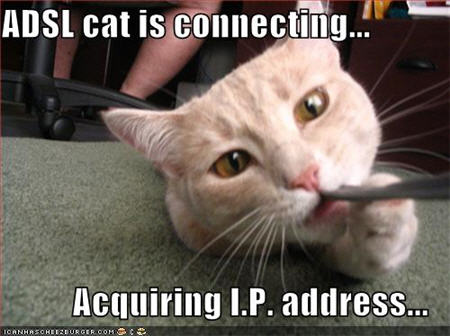 lolcats adsl cat