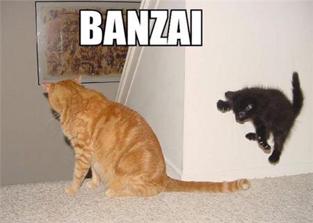 LOLcats banzai