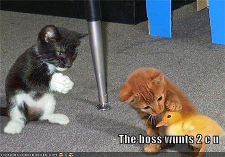 lolcats boss wants to see you.