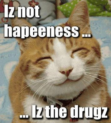 lolcats drugs lolsecretz