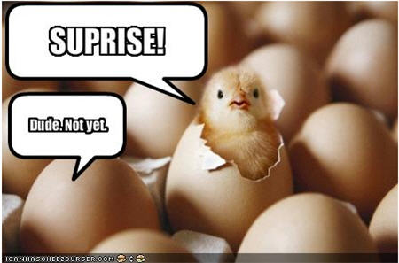 lolcats surprise eggs dude not yet