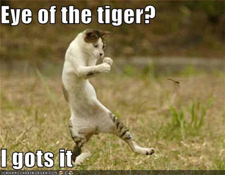 lolcats eye of the tiger