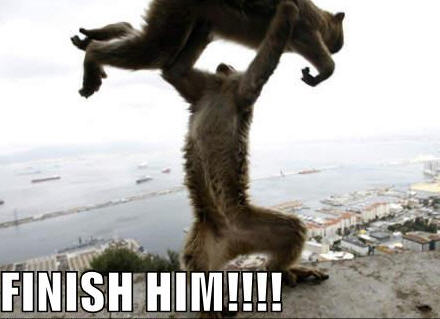 http://whall.org/blog/files/lolcats-finish-him.jpg