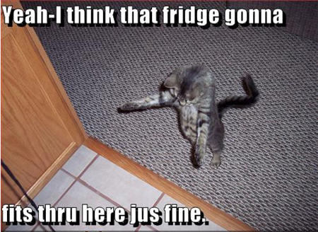 lolcats fridge fit in here just fine
