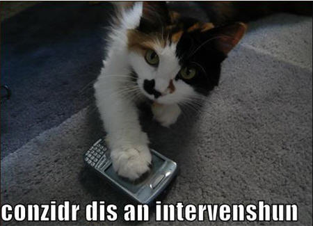 lolcats intervention blackberry