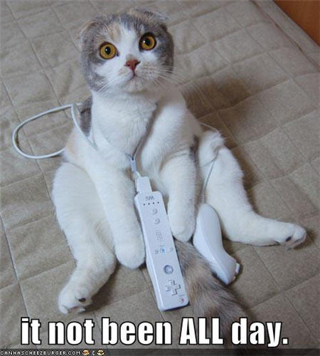lolcats it not been all day