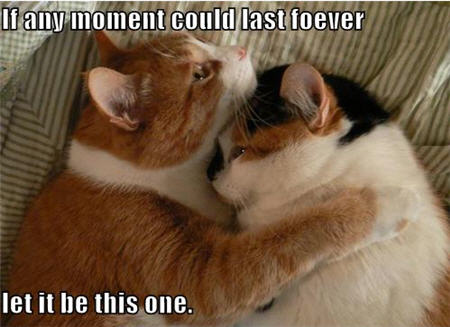 lolcats any moment last forever this one