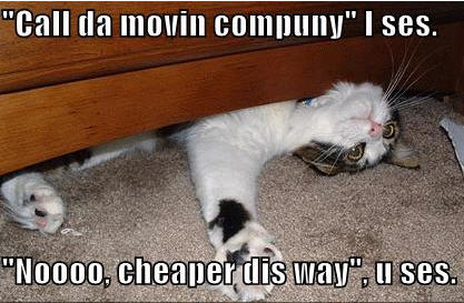 lolcats call the moving company