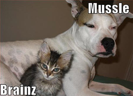 lolcats muscle brains