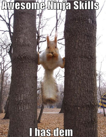 lolcats awesome ninja skills squirrel