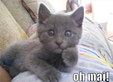 lolcats oh mai kitty