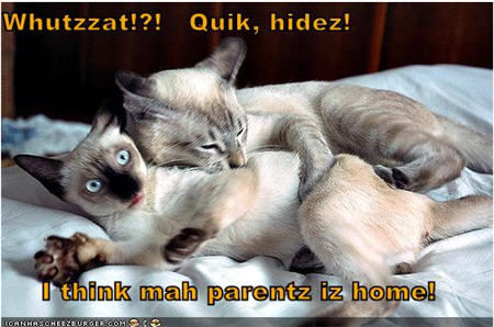 lolcats parents