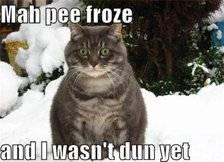 lolcats my pee froze