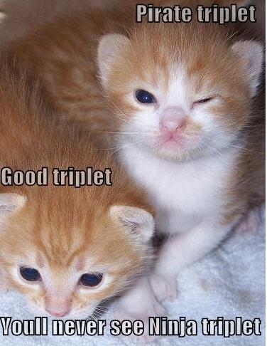 pirate triplet ninja