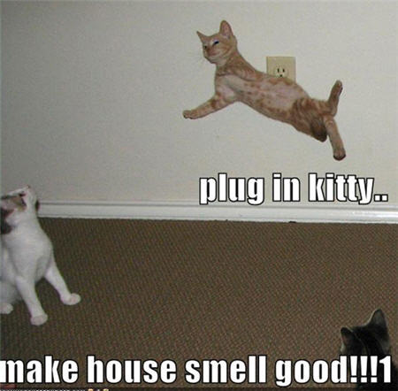 LOLcats plug-in kitty