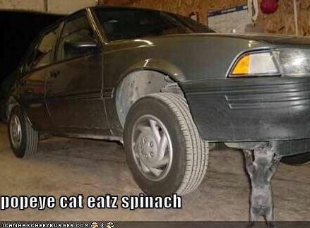 lolcats popeye car