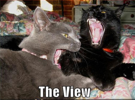 lolcats the view