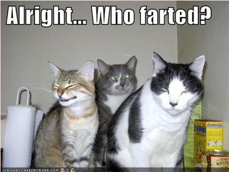 lolcats who farted?