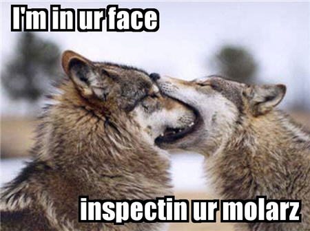 lolcats wolves