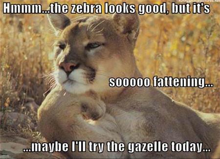 lolcats zebra looks good but fattening