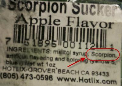 scorpion-closeup